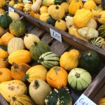 pumpkin editorial services
